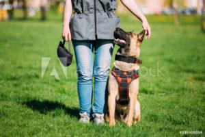 BH-Prüfung @ Hundeplatz