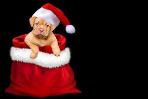 Weihnachtsfeier @ Gaststätte Grüntal